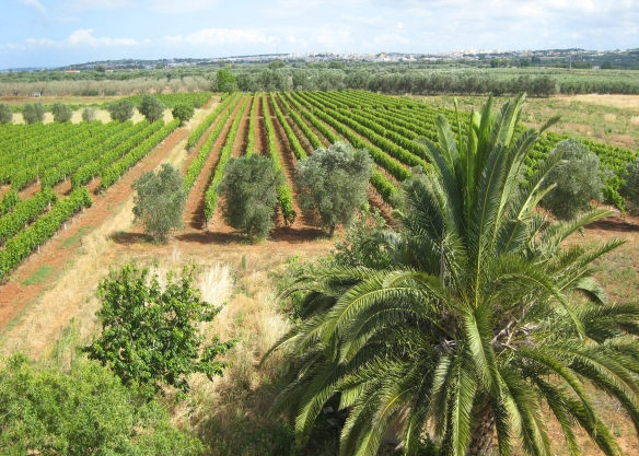 boaretti-vineyards