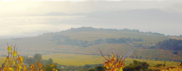 montgras-vineyard