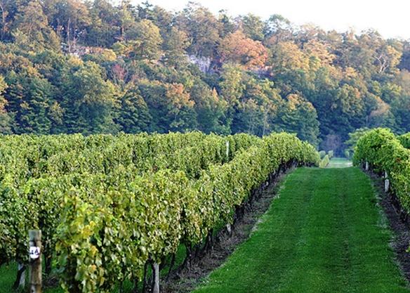 cave-spring-vineyard